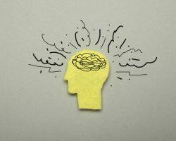 Hersenen op hol